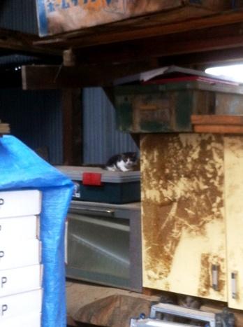 子猫と母猫.JPG